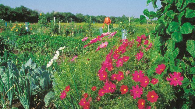 A közös kertészkedés összeköt (Copyright: MA49 Lammerhuber
