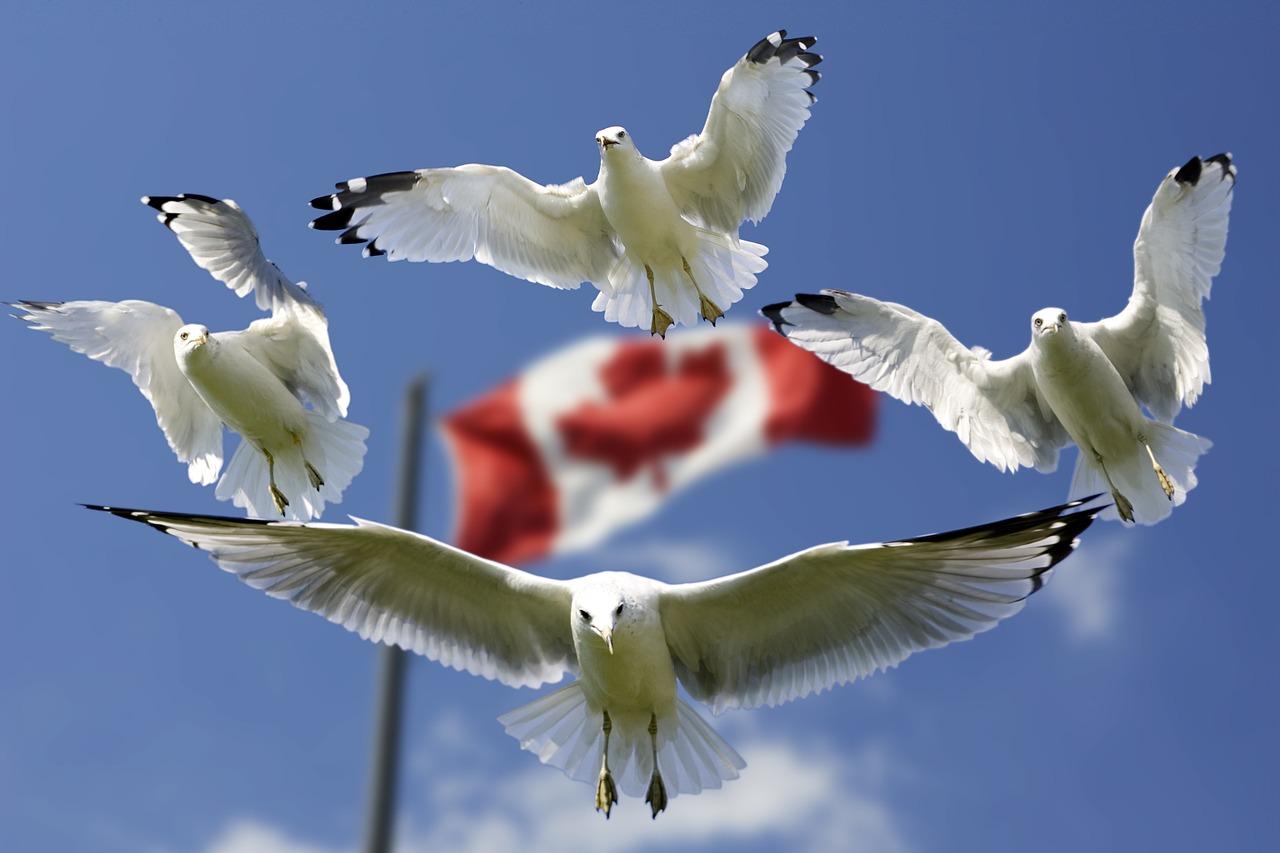 Megszavazták Kanadában a CETÁTT