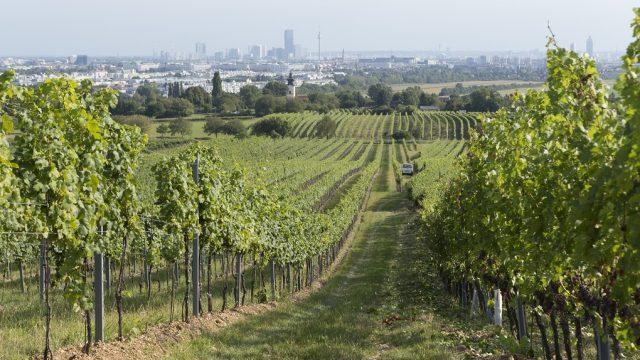 Biogazdaság, Bécs (Fotó©ReginaHügli