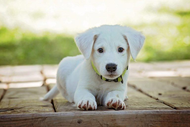 Hitelminősítés Kínában-kutyatulajdonosoknak
