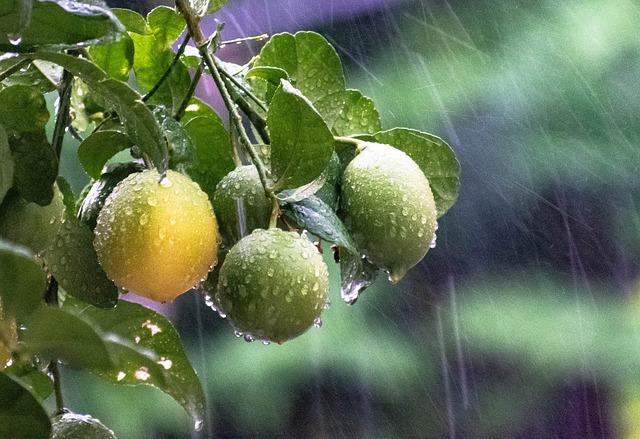 Időjárás:nyári esőzése